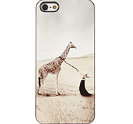 Beauty and Giraffe Pattern PC Hard Case with 3 Packed HD Screen Protectors for iPhone 5/5S