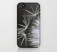 Dandelion  Pattern Hard Case for iPhone 4/4S