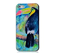 Toucan Pattern Hard Case for iPhone 5/5S