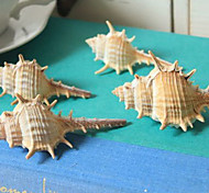 Qihang Photography Decoration Conch with Long Thorns Photography Props