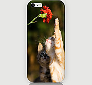 Be Seen Cats Pattern Case Back Cover for Phone6 Case