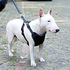 sininen säädettävissä muovi turvallisuutta ja näkyvä yöllä koiran valjaat auton turvavyö hihnassa