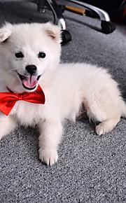 katten / honden Stropdas/Vlinderdas Rood / Oranje / Blauw / Paars / Zwart / Roze Hondenkleding Zomer / Lente/Herfst StrikSchattig /