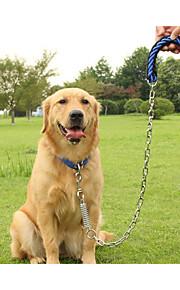 Satsuma Golden Collar dog leashes in large